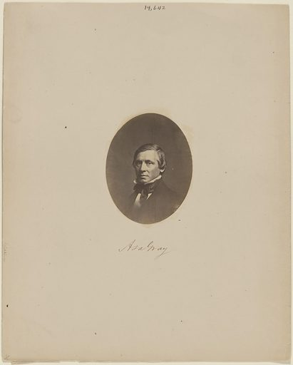 Asa Gray. Sitter: Asa Gray, 18 Nov 1810 – 30 Jan 1888. Date: 1850s. Record ID: npg_NPG.78.302.