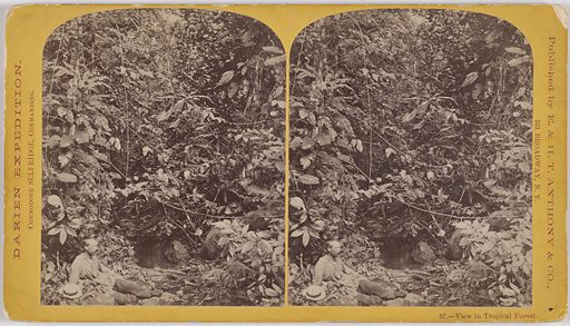 View in Tropical Forest/ Darien Expedition. Date: 1870s. Record ID: npg_S_NPG.2007.117.