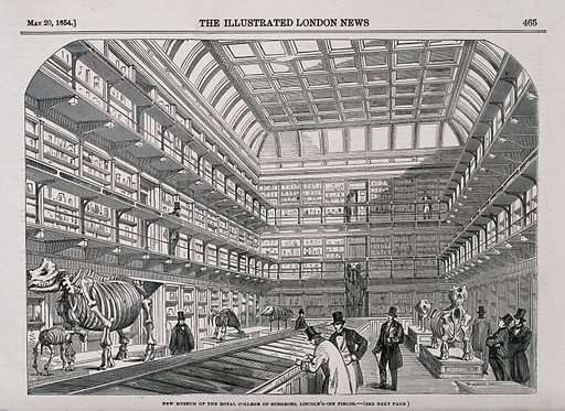 The Royal College of Surgeons, Lincoln's Inn Fields, London: the interior of the museum. Wood engraving after T R MacQuoid, 1854. Surgeons. Museums. Skeleton. Universities and colleges. Animals – Classification. Lincoln's Inn Fields (London, England). Richard Owen (1804–1892). Royal College of Surgeons of England. Contributors: Thomas Robert Macquoid (1820–1912). Work ID: hnq59d96.