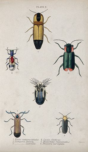 Six winged insects. Coloured engraving by W H Lizars. Contributors: W H Lizars (1788–1859). Work ID: bmxer834.