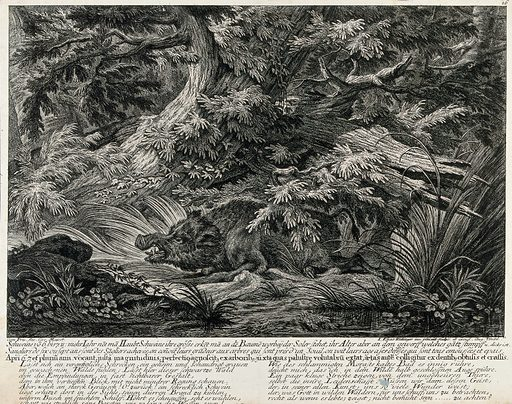A fully-grown wild boar resting in the forest. Etching by JE Ridinger. Contributors: Johann Elias Ridinger (1698–1767). Work ID: xybp37vp.