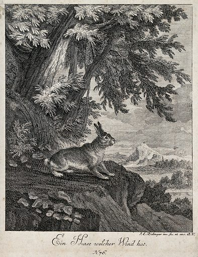A hare standing on a rugged rock outside a forest getting wind of its environment. Etching by JE Ridinger. Contributors: Johann Elias Ridinger (1698–1767). Work ID: e95pgane.