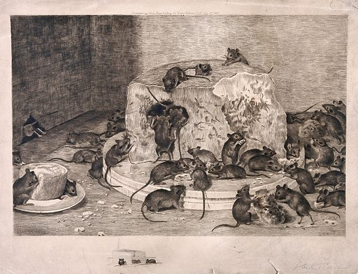 House mice devouring a large cheese placed on the floor next to their hole