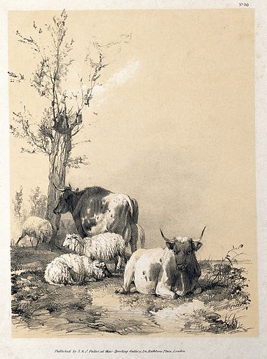 Cows and sheep resting in a field. Lithograph with gouache by A Ducote. Sheep. Domestic animals. Cattle. Cows. Contributors: A Ducote (active 1840). Work ID: puby3xf4.