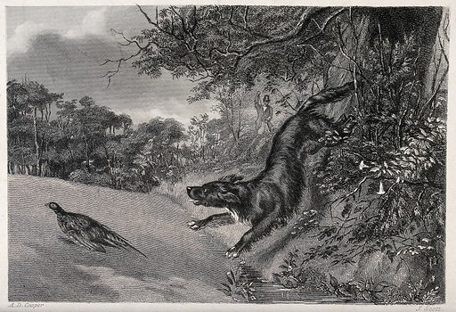 A hunting dog chasing after fowl while the huntsman reloads his gun. Etching by J Scott after A D Cooper. The huntsman can be seen in the background. Contributors: Alexander Davis Cooper (active 1830–1888); John Scott (1774–1827). Work ID: c8kq52zk.
