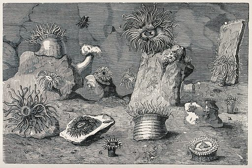 A variety of sea anemones on the ground of an aquarium