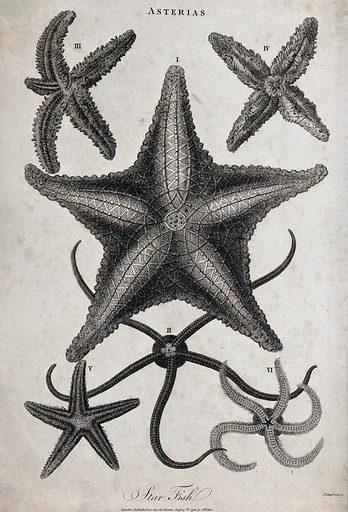 A variety of star fish