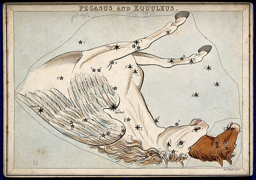 Astrology: signs of the zodiac, Pegasus
