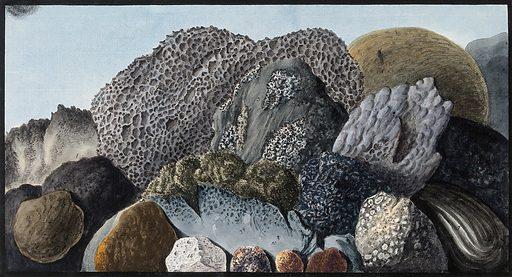 Lava, scoriae and pumice from Mount Vesuvius