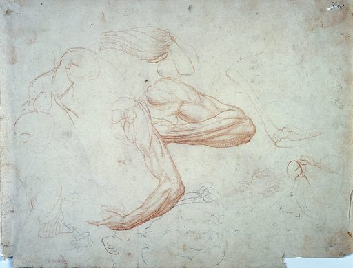 Muscles and bones of the arm and forearm. Chalk drawing. Verso: five arm studies and a leg study. Contributors: Giovanni Ambrogio Figino. Work ID: r8ywgj2v.