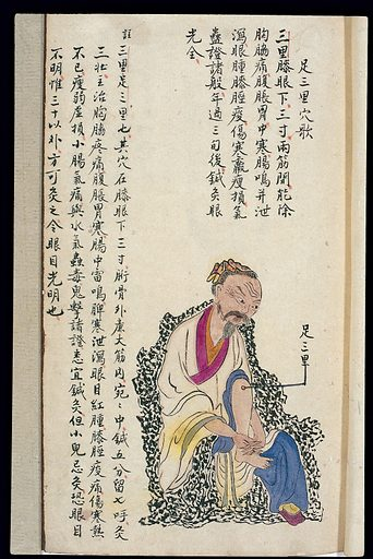 C19 Chinese MS moxibustion point chart: Zu san li. Acu-moxa point chart, showing the zu san li (Leg Three Miles) point, from Chuanwu lingji lu (Record of Sovereign Teachings), by Zhang Youheng, a treatise on acu-moxa in two volumes. This work survives only in a manuscript draft, completed in 1869 (8th year of the Tongzhi reign period of the Qing dynasty). It is illustrated with 84 charts, finely executed in colour. Chinese Medicine. TCM. Work ID: v8cu9pha.