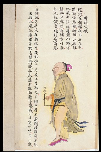 C19 Chinese MS moxibustion point chart: Huantiao. Acu-moxa point chart, showing the huantiao (Jumping in a Circle) pointpoint, from Chuanwu lingji lu (Record of Sovereign Teachings), by Zhang Youheng, a treatise on acu-moxa in two volumes. This work survives only in a manuscript draft, completed in 1869 (8th year of the Tongzhi reign period of the Qing dynasty). It is illustrated with 84 charts, finely executed in colour. Chinese Medicine. TCM. Work ID: u5u5dnbw.