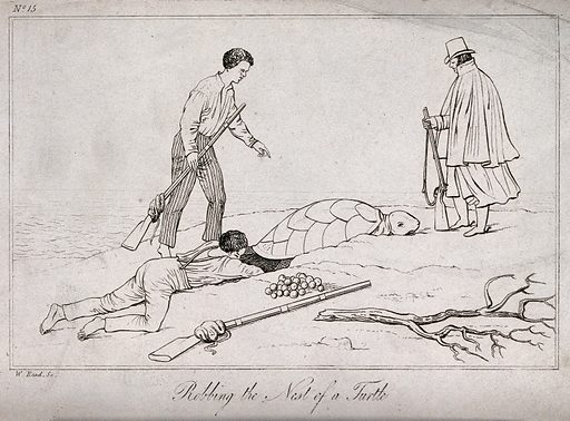 One man is digging into the turtle's nest to get at the … free public domain image | Look and Learn