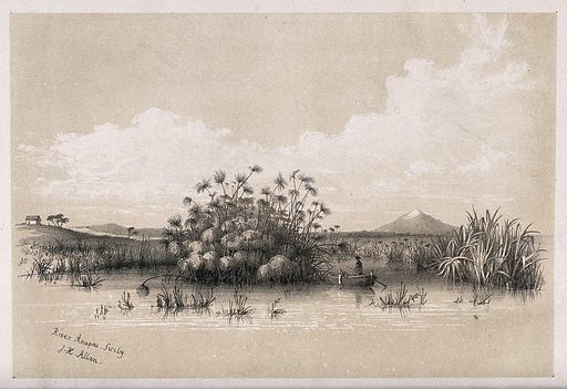 A river with clumped papyrus grass (Cyperus papyrus) and a rowing boat. Lithograph after J Allan, c1843. Contributors: John Harrison. Allan. Work ID: xe5hrbbd.