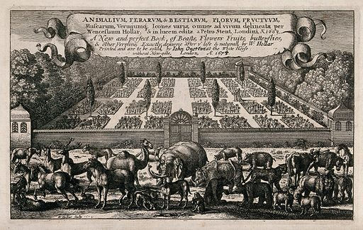 A gathering of many different animals with a large walled classical Italian-style garden behind and a banner bearing the book title above. Etching by W Hollar, 1663, after himself. Created 1674. Botany – England – History (- 17th century). Botany – Pre-Linnean works. Zoology – England – History (- 17th century). Zoology – Pre-Linnean works. Animals. Mythical. Animals. Unicorns. Elephants. Camels. Horses. Rhinoceroses. Rhinoceros (Genus). Deer. Monkeys. Dogs. Bears. Lion. Sheep. Cattle. Gardens. Wall gardens. Italian. Gardens. Cultivated. Plants. Ornamental. Plants. Leopard. Contributors: Wenceslaus Hollar (1607–1677). Work ID: uy3azesg.