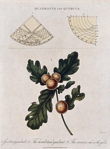Two types of quadrant and a branch of common oak (Quercus robur) with galls. Coloured engraving by J Pass, c 1826. Work ID: y74p6chy.