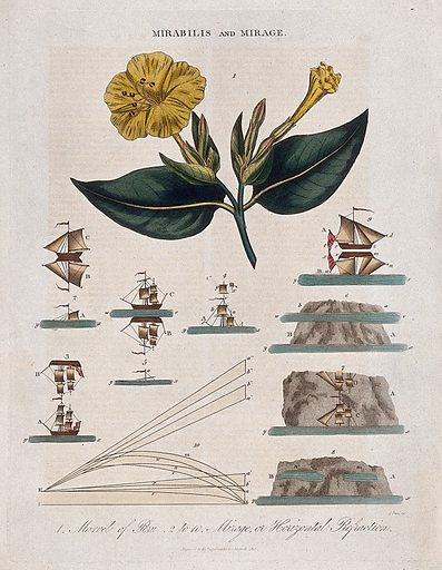 A flowering marvel of Peru plant (Mirabilis jalapa) and nine diagrams illustrating refraction of light. Coloured engraving by J Pass, c 1817. Work ID: d562vqh8.