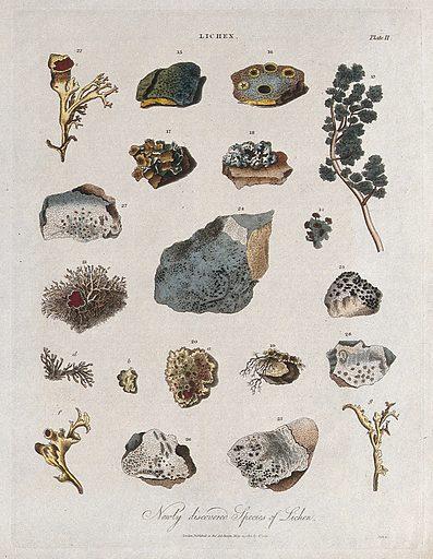 Fifteen different species of lichen. Coloured etching by J Pass, c 1813. Work ID: dzahkpdt.