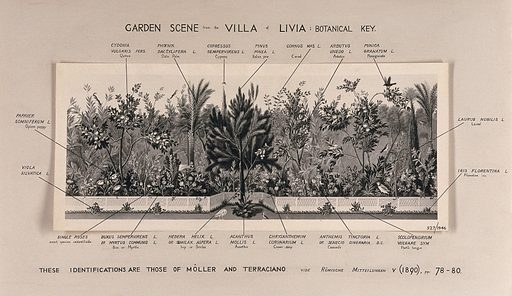 A border of plants from a Roman garden in the 1st century AD, with the main plants labelled. Photograph. Horticulture. Botany. Gardens. Roman. Gardens. Gardens – Styles. Fruit trees. Pine. Birds. Quince. Pomegranate. Palms. Cultivated. Plants. Useful. Plants. Edible. Plants. Medicinal plants. Herbs. Shrubs. Work ID: cb3dtah2.