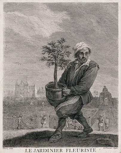 A man carries a large pot plant while, in the background, gardeners are at work. Etching by JC Le Vasseur, 18th century, after Teniers. Gardens. Gardeners. Gardening. Horticulture. Potted. Plants. Cultivated. Plants. Flowerpots. Plant containers. Contributors: David Teniers (1610–1690); Le Vasseur, Jean Charles (1734–1816). Work ID: qbz5h673.