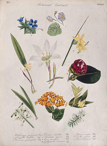 Ten flowering plants, including two orchids and a zephyr lily. Coloured transfer lithograph, c 1833. Work ID: m239xshs.