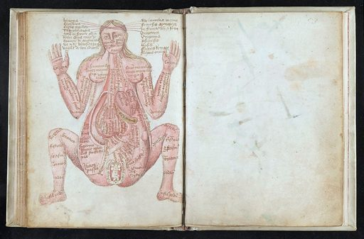 Anathomia. 52v Pregnant woman, seated legs apart,flesh tinted. In English, illustrated by eight coloured anatomical drawings. Work ID: y75c3n6p.