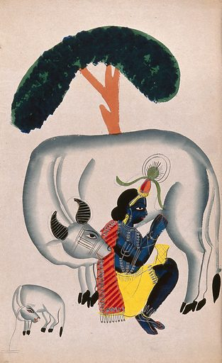 Krishna milking a cow while the calf looks. Watercolour drawing. Krishna (Hindu deity). Hindu gods. Cows. Hindu mythology. Work ID: tgtm9w67.