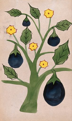A tree with giant fruits. Watercolour drawing. Fruit. Seasons – Mythology – India. Flowers. Work ID: jbrevgys.