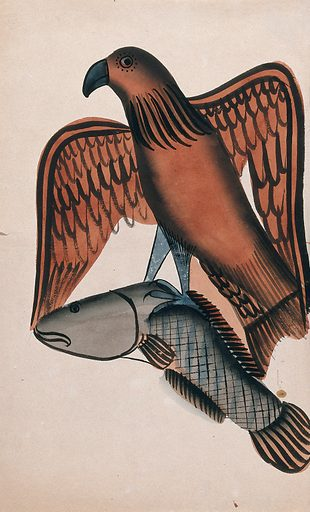 A bird of prey carrying off a fish. Watercolour drawing. Birds of prey – India. Hunting. Fishes. Natural history – India. Work ID: bt6thy4q.