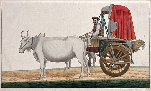 A man driving a bullock cart with a canopied top. Gouache painting by an Indian artist. Created between 1800 and 1899?. Work ID: bpw76hac.