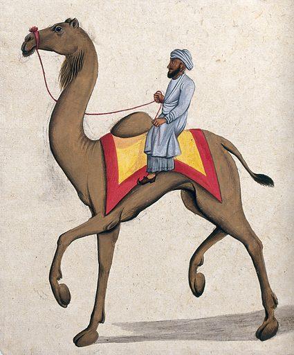 A man riding on a camel. Gouache painting by an Indian artist. Created between 1800 and 1899?. Work ID: mu82vun2.