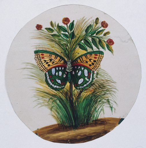 A green and orange spotted butterfly. Gouache painting on mica by an Indian artist. Created between 1800 and 1899?. Work ID: hr9sj9tu.