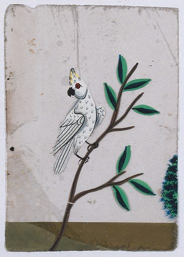 A white cockatoo sitting on a stem. Gouache painting on mica by an Indian artist. Created between 1800 and 1899?. Work ID: xy2kpshn.
