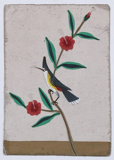 A white, yellow and grey bird perched on a flower stem. Gouache painting on mica by an Indian artist. Created between 1800 and 1899?. Work ID: n4ndejx6.