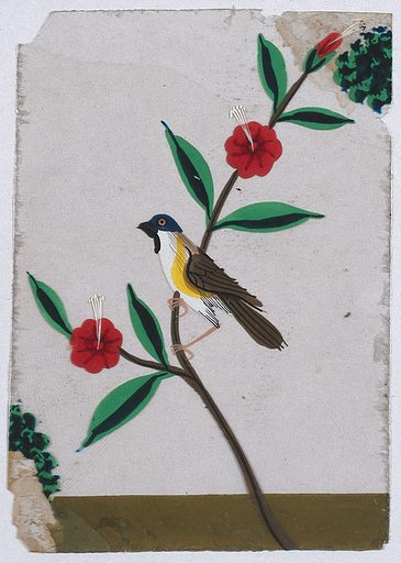 A white, yellow and brown bird with a blue head sitting on a flower street. Gouache painting on mica by an Indian artist. Created between 1800 and 1899?. Work ID: nbn3et7y.