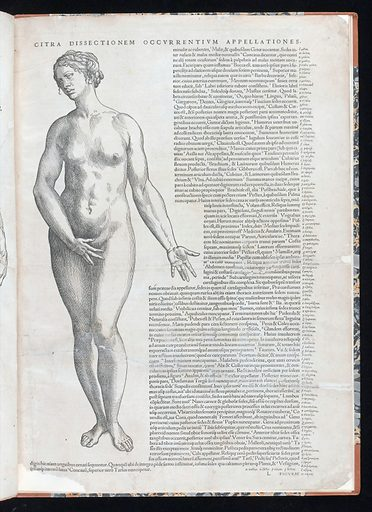 Andreas Vesalius. Contributors: Jan Stephan van Calcar. Work ID: qcey4v9n.