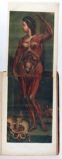 Anatomie des parties de la génération de l'homme et de la femme … jointe a l'angéologie de tout le corps humain, e a ce qui concerne la grossesse et les accouchemens. Work ID: pudsxuf6.