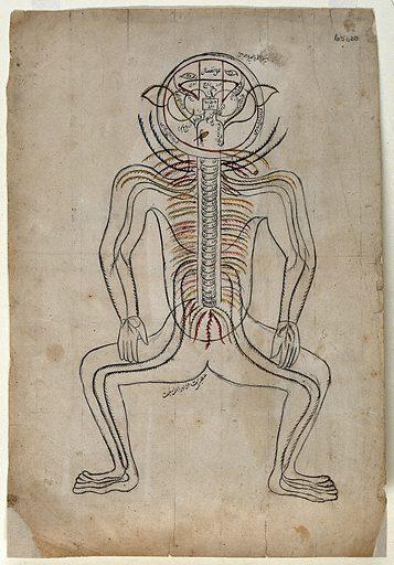 "Nerves of the human body. Watercolour drawing by a Persian artist. Diagram comparable to the ""six picture series"" or ""Alexandrian series"" pasted or bound in Persian manuscripts of the ""Zakhīrah-i Khvārazm'Shāhī"" (""Treasure of Khvārazm'Shāhī"") written by al-Jurjani (Ismā'īl ibn Muḥammad al-Ḥusayn Jurjānī) ca 1110 AD, and the ""Tashrīḥ-i Mansur-i"" (""Anatomy of Mansur"" written by Manṣūr ibn Muḥammad ibn Aḥmad ibn Yūsuf Ibn Ilyā, ca 1390 AD. Created between 1800 and 1899?. Human anatomy. Work ID: sc7ptw4y."