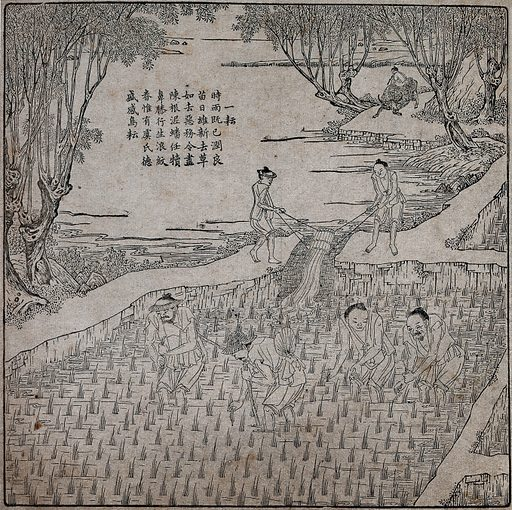 Rice cultivation: four men transplanting rice seedlings (?) in a paddy field, while behind them two men irrigate the field. Woodcut, 1696. Created 1696. Contributors: Bing Zhen Jiao (active 1680–1720); Emperor of China Kangxi (1654–1722). Work ID: ryjqssze.