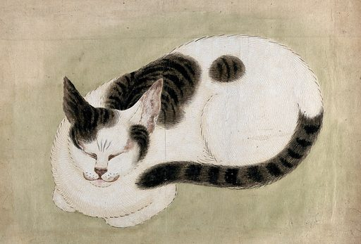 A sleeping cat. Gouache, 18 –. Created between 1800 and 1899. Work ID: r6ssyh25.