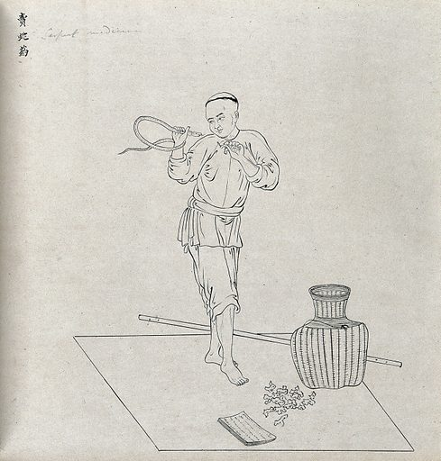 A Chinese seller of a snake antidote. Drawing by a Chinese artist, ca 1850. Created 1850. Work ID: nehrwajq.