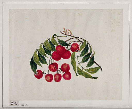 Bright, cherry-red berries, with green leaves. Painting by a Chinese artist, ca 1850. Created 1850. Work ID: awy68nqz.