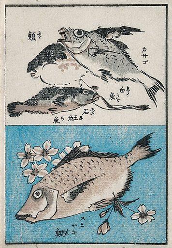 Fish swimming. Colour woodcut, 18 –. Work ID: yas32wvs.