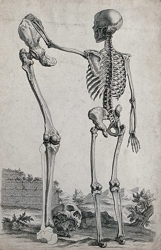 Skeleton standing in a landscape, holding a bone. Engraving, ca 1750. Created 1750?. Work ID: k9dpz5sq.