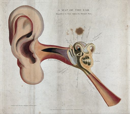 The human ear: a diagram showing the parts of the inner and outer ear. Coloured line engraving drawn by G Kirtland in 1801 and published in 1815. Created 1815. Human anatomy. Contributors: George Kirtland (active 1796–1815). Work ID: xn6p2e6m.