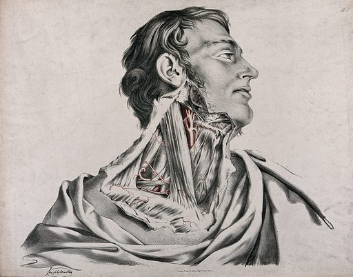The circulatory system: dissection of the neck of a man, with arteries and blood vessels indicated in red. Coloured lithograph by J Maclise, 1841/1844. Created 1841/1844. Blood – Circulation. Human anatomy. Contributors: Joseph. Maclise. Work ID: j8fn9x2s.