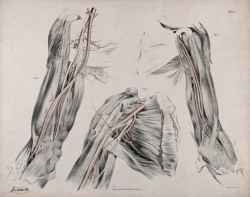 The circulatory system: dissections of the upper arm and the shoulder, with arteries and blood vessels indicated in red. Coloured lithograph by J Maclise, 1841/1844. Created 1841/1844. Blood – Circulation. Human anatomy. Contributors: Joseph. Maclise. Work ID: g2ujnq38.
