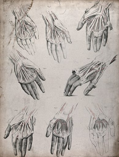 The circulatory system: dissections of the hand, with the arteries indicated in red. Coloured lithograph by J Maclise, 1841/1844. Created 1841/1844. Blood – Circulation. Human anatomy. Contributors: Joseph. Maclise. Work ID: pg5rfcbn.