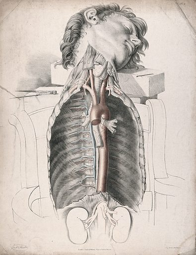 The circulatory system: dissection of the neck and thorax, with the arteries indicated in red and the veins in blue. Coloured lithograph by J Maclise, 1841/1844. Created 1841/1844. Blood – Circulation. Human anatomy. Contributors: Joseph. Maclise. Work ID: kfzp57rj.