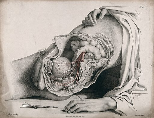 The circulatory system: dissection of the abdomen and pelvic region of a man, side view, showing the intestines and bladder, with the arteries indicated in red. A surgical instrument is shown below. Coloured lithograph by J Maclise, 1841/1844. Created 1841/1844. Blood – Circulation. Human anatomy. Contributors: Joseph. Maclise. Work ID: njnmfmby.